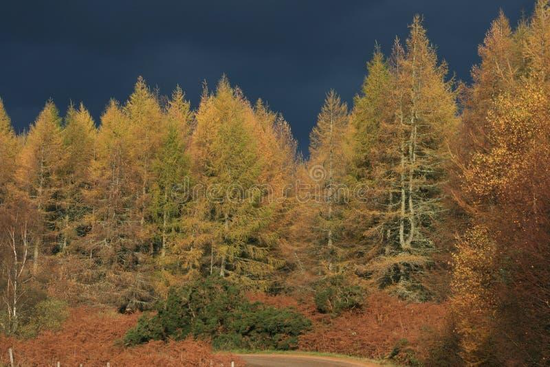 秋天灰色天空风雨如磐的结构树 免版税库存照片
