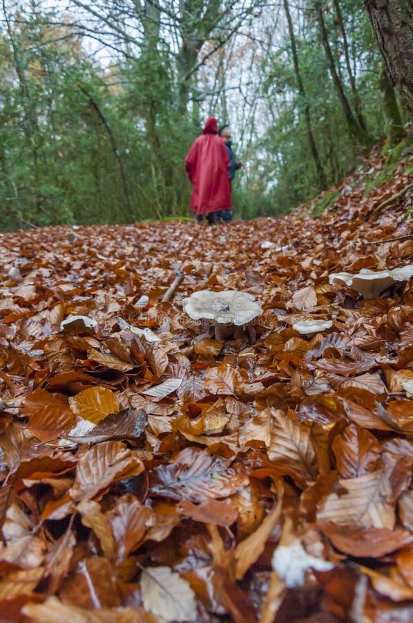 秋天甚而草绿色留下橙色平静的视图天气 森林 库存照片