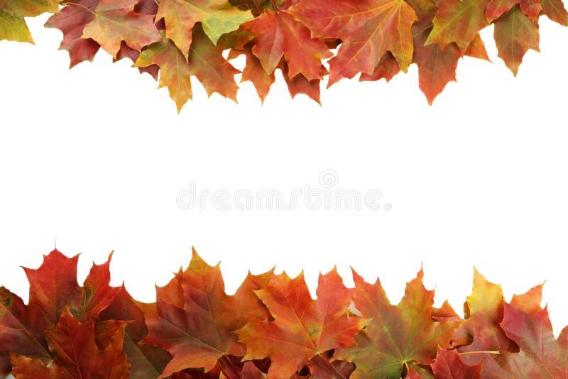 秋天生叶在白色背景的框架 免版税库存照片
