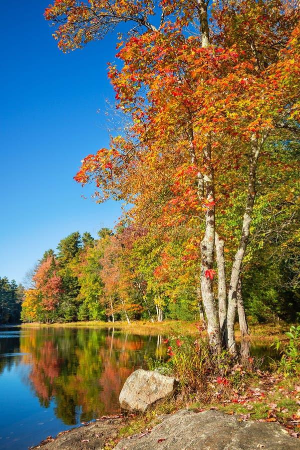 秋天由一个湖的叶子树在新英格兰 免版税库存图片