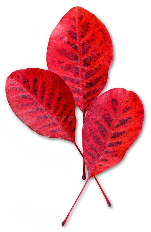 秋天留下红色三 库存图片