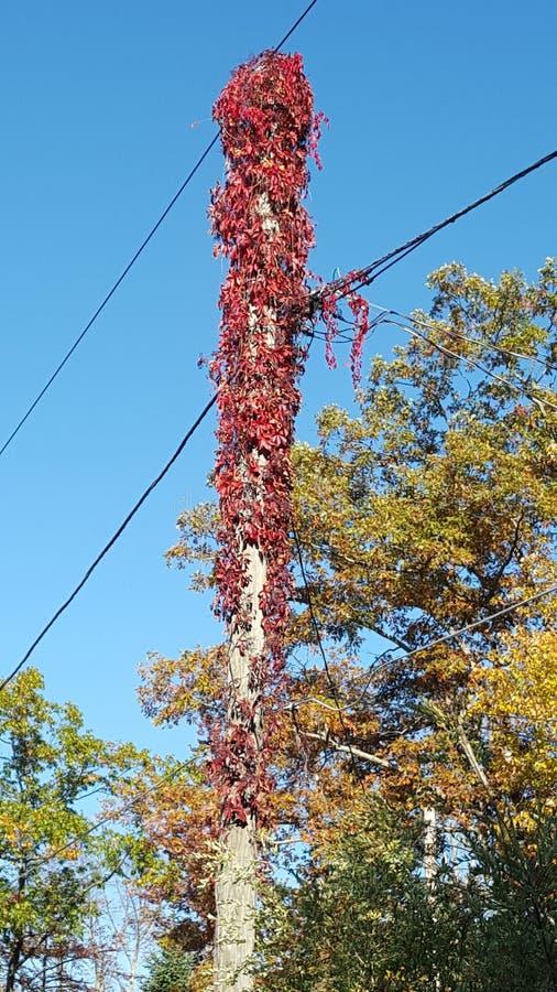 Download 秋天留给自然纹理充满活力 库存图片. 图片 包括有 叶子, 天空, 秋天 - 72352507