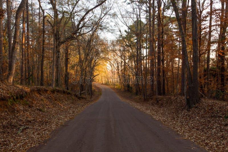 秋天的东部得克萨斯Backroad 免版税库存图片