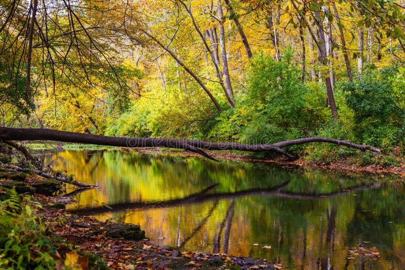 秋天的克利夫顿峡谷 免版税图库摄影