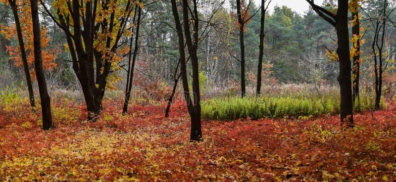 秋天的双折的画 库存图片