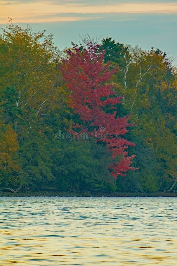秋天的变化的颜色沿湖边平地的 免版税库存图片