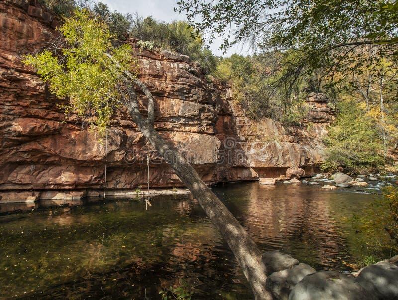 秋天的塞多纳橡树溪与cooll树摇摆 库存图片