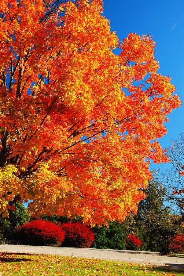 秋天的大胆的颜色 免版税库存图片