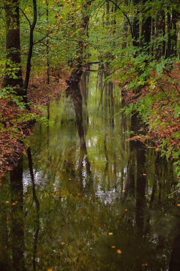 秋天的明亮的森林河 免版税库存照片