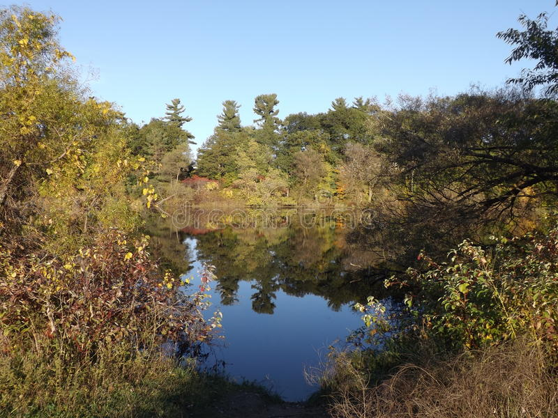 秋天的池塘 库存图片