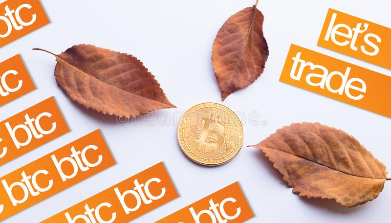 秋天的设计元素 真正硬币Bitcoin在下落的秋叶的中心与文本的 图库摄影