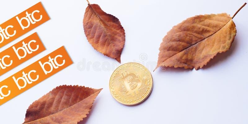 秋天的设计元素 真正硬币Bitcoin在下落的秋叶的中心与文本的 库存图片