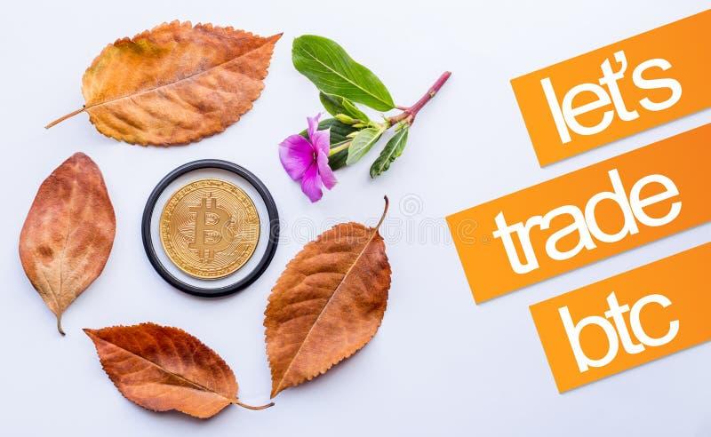 秋天的设计元素 Bitcoin在下落的秋叶和一点桃红色花的中心 免版税库存图片