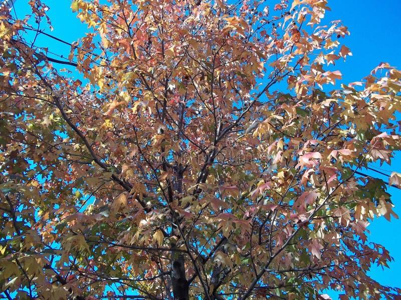 秋天的金黄颜色 图库摄影