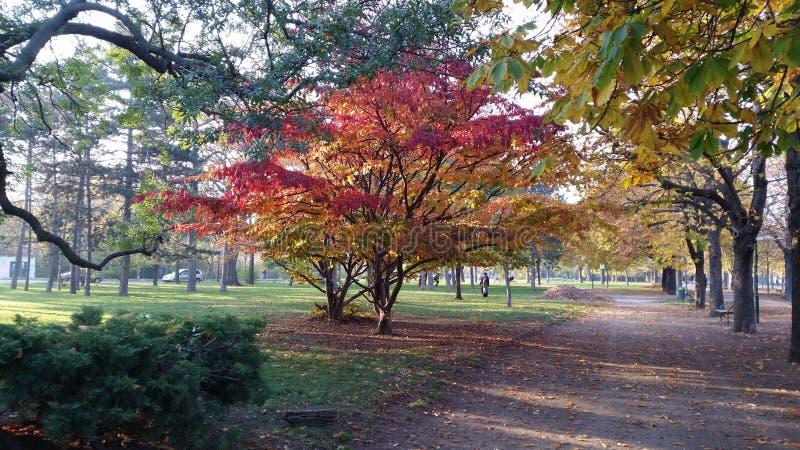秋天的难以置信的颜色 库存图片
