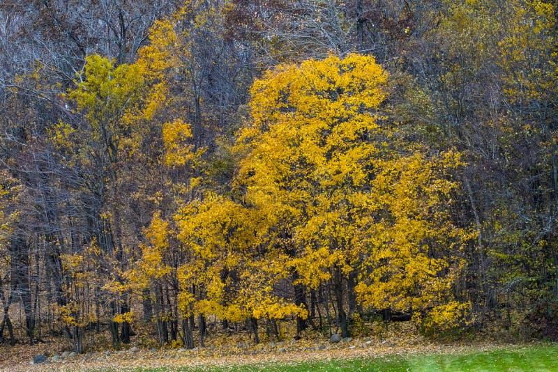 秋天的颜色在中西部 免版税图库摄影