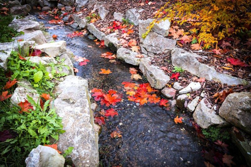秋天的颜色在公园,拉脱维亚 免版税库存图片