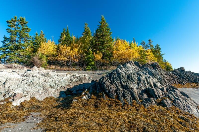秋天的颜色在加拿大 库存图片