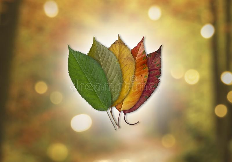 秋天的颜色-在Bokeh背景的色的叶子 图库摄影