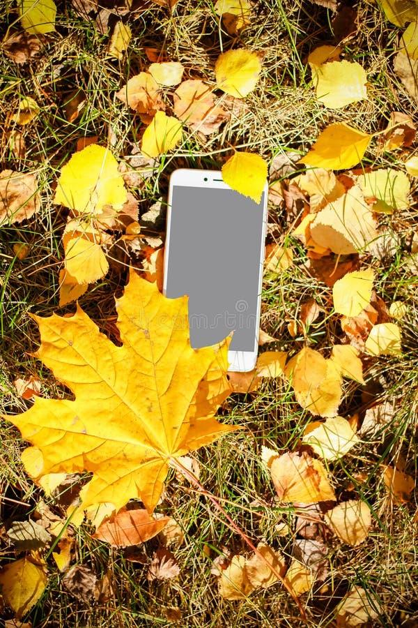 秋天的颜色 有一个地方的黑电话您的商标的 库存图片