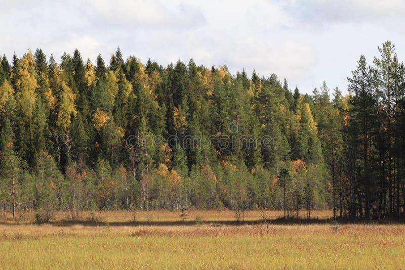 秋天的颜色 遥远的森林在阳光下 免版税库存图片