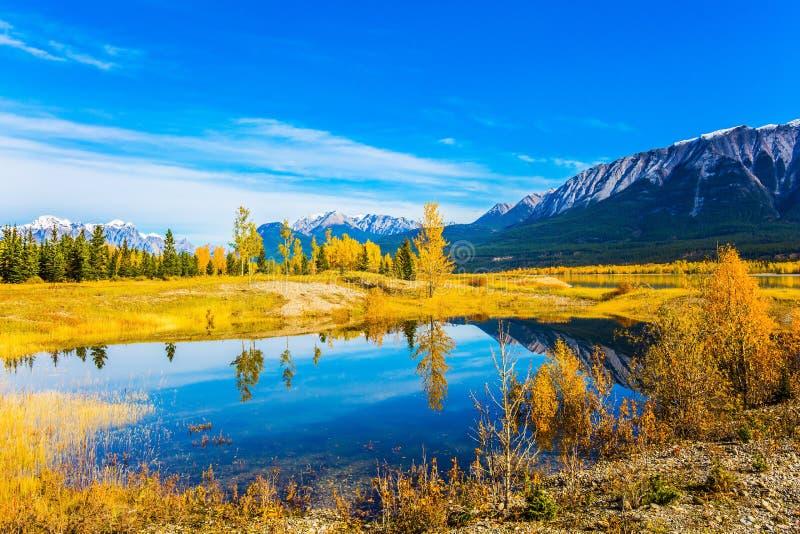 秋天的黄色和橙色颜色 免版税库存图片