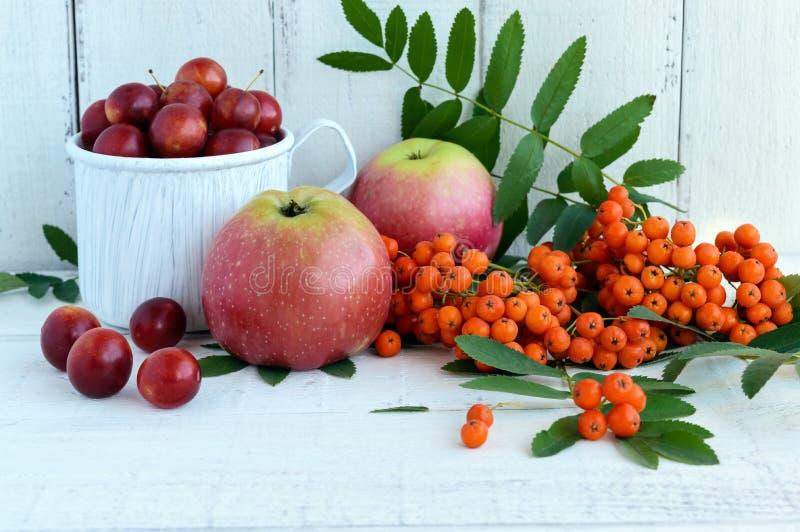 秋天礼物:苹果,樱桃李子,在白色背景的山脉灰 在黄色的静物画,橙色,红色 免版税库存照片