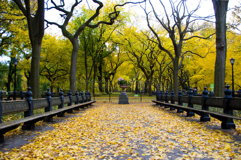 秋天秀丽在中央公园NYC 免版税库存照片