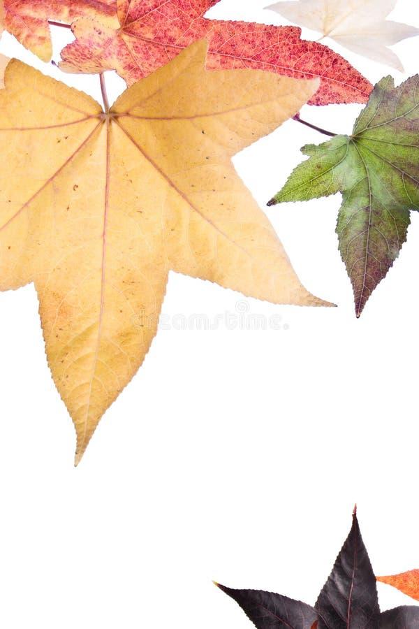 秋天秋天叶子 免版税库存照片