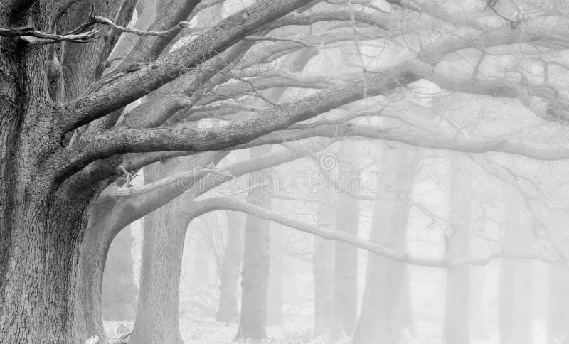 秋天秋天有雾的森林横向冬天 免版税库存图片