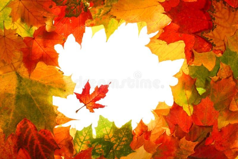秋天秋天框架叶子 库存照片