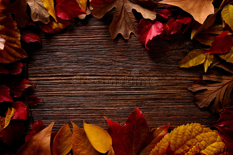 秋天秋天框架金黄红色在木头离开 库存图片