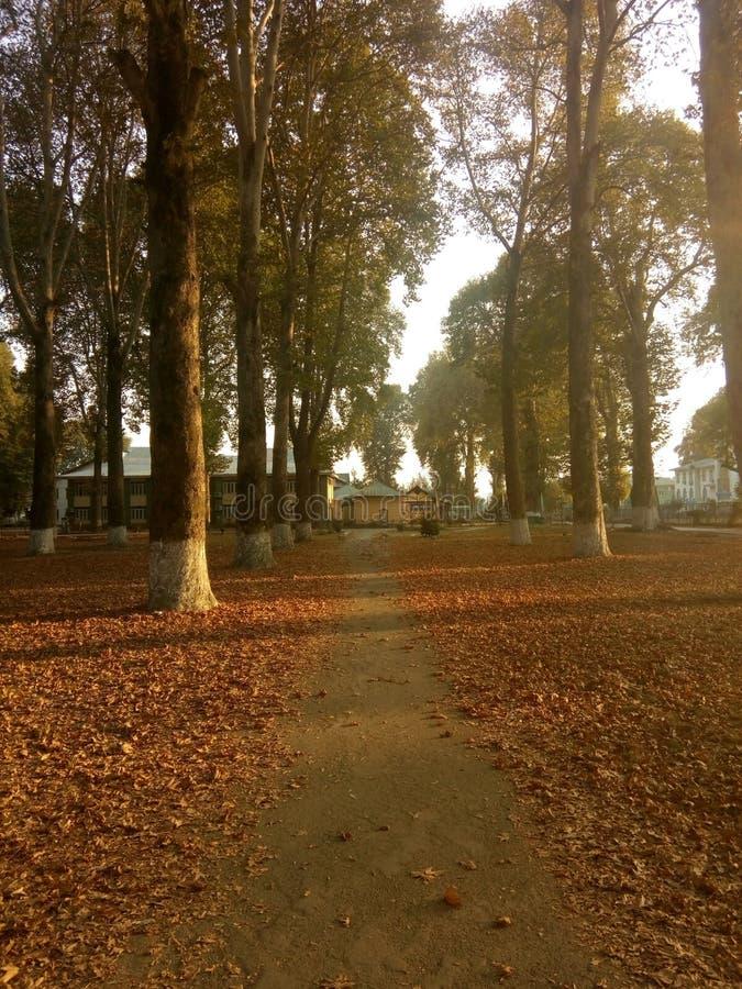 秋天秋天森林路径季节 免版税库存图片
