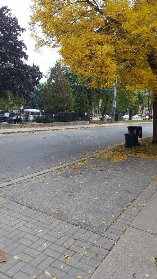 秋天秋天横向留下结构树 库存图片