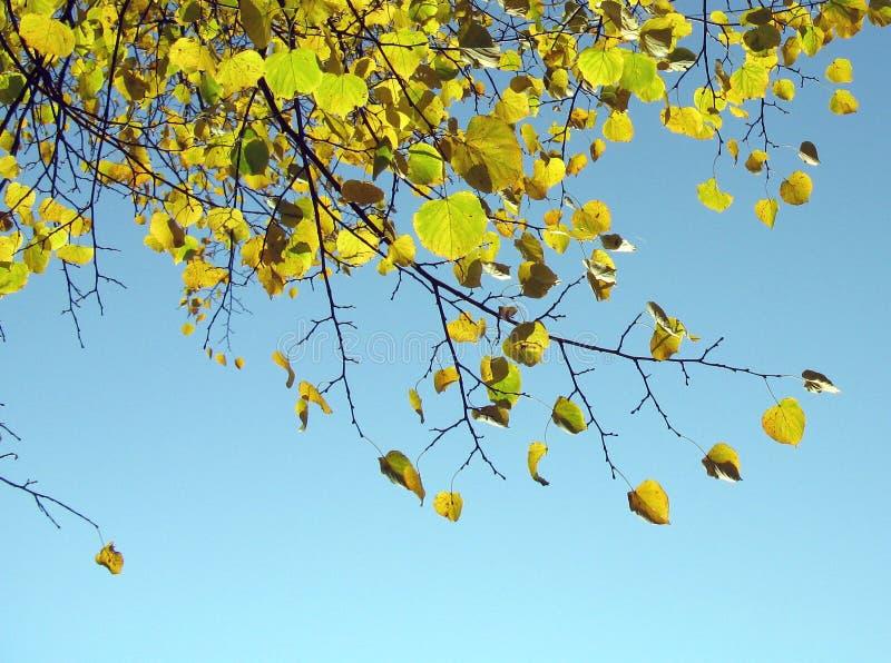 秋天结构树。 免版税库存照片