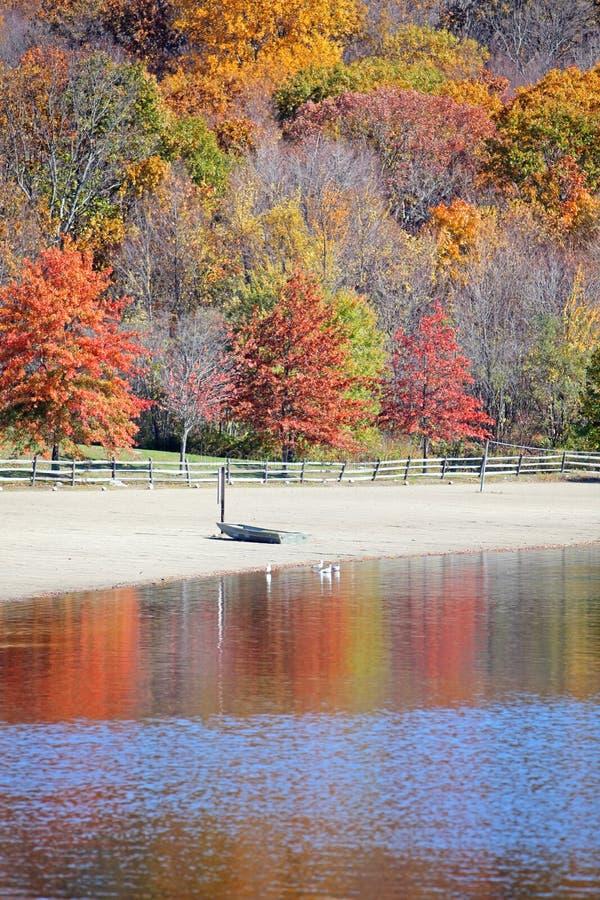 秋天结构树水 库存照片