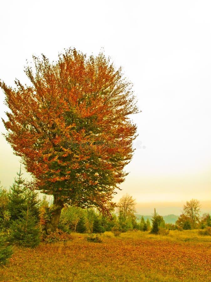Download 秋天结构树 库存图片. 图片 包括有 美丽如画, 树木繁茂, 本质, 户外, 覆盖物, 背包, 木头, 结构树 - 12680495