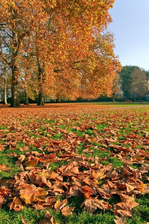 秋天绿色公园视图 库存照片