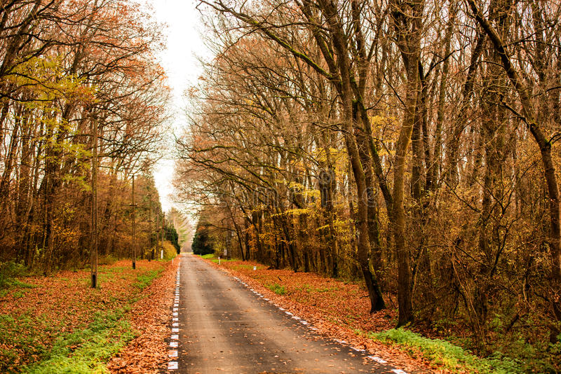 秋天美丽的森林运输路线 库存照片