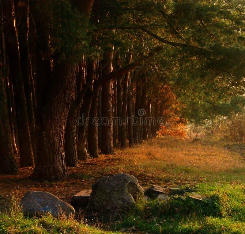 秋天美丽的森林 免版税图库摄影
