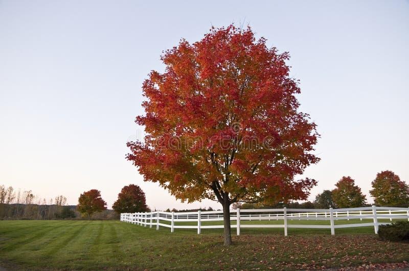 秋天美丽的红色结构树美国佛蒙特 免版税库存照片