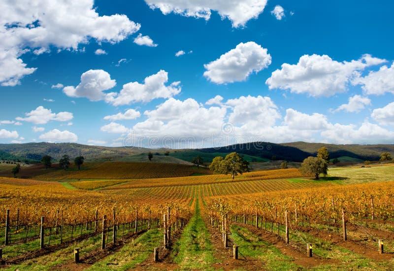 秋天美丽的葡萄园