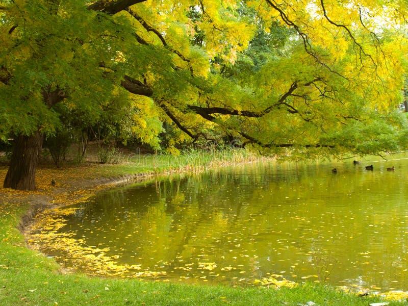 秋天美好的湖横向端 库存图片