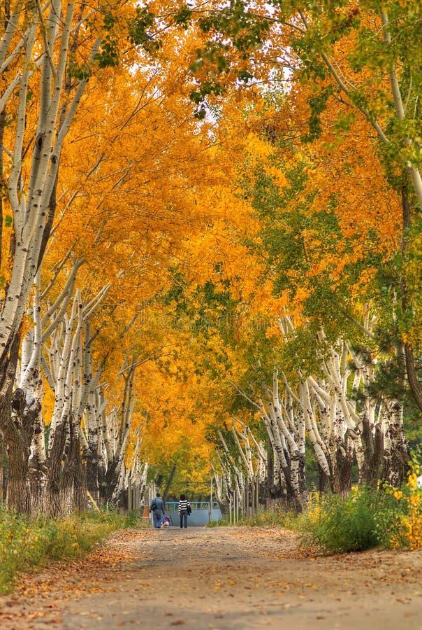 秋天美好的风景 免版税库存图片