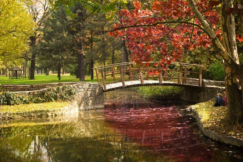 秋天美好的风景 库存照片