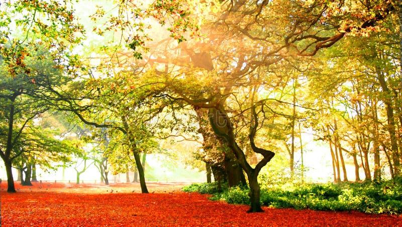 秋天美妙的森林 免版税库存照片