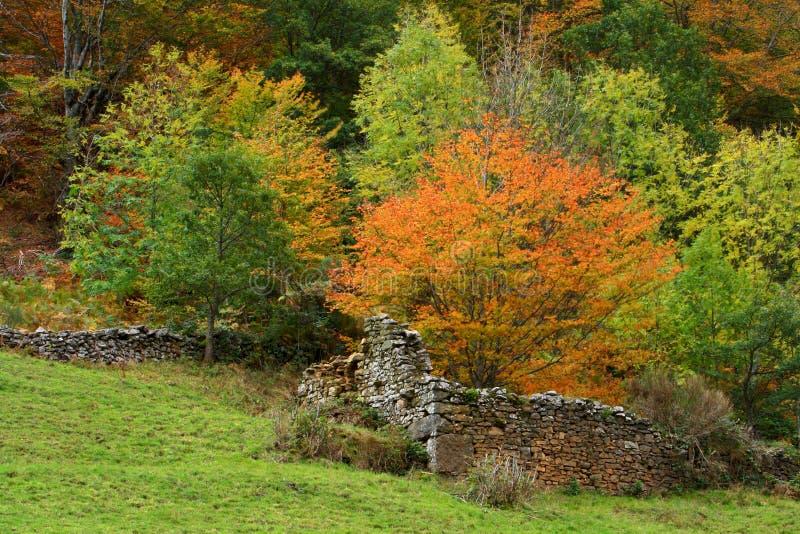 秋天老墙壁 库存照片