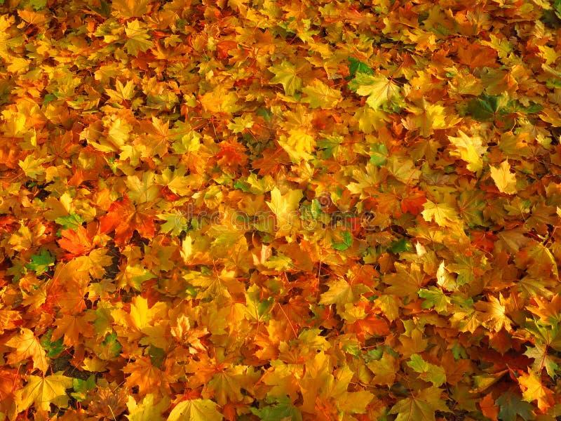 秋天背景五颜六色的干燥叶子叶子 免版税图库摄影