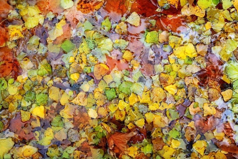 秋天背景五颜六色的秋天留下水 免版税库存图片