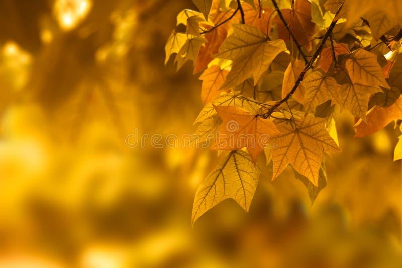 秋天背景叶子 免版税库存照片